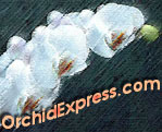 OrchidExpress