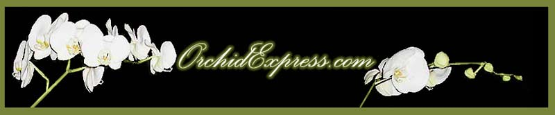 Welcom to Orchid Express