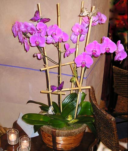Another beautiful orchid