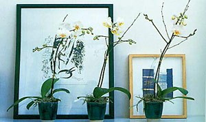 Three Orchid Displays